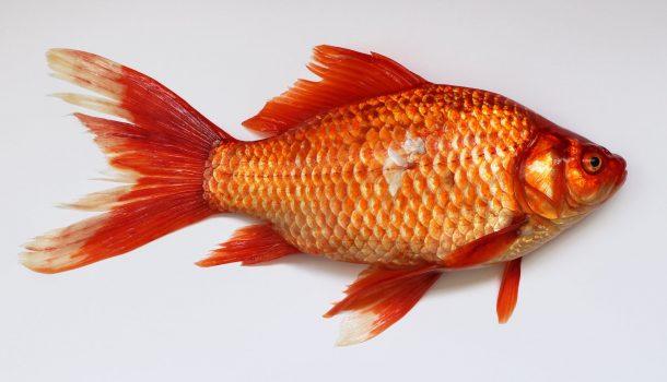 THE FAIR WAS O-FISH-ALLY A SUCCESS!