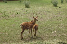 OH DEER! WEATHER AFFECTS HERD NUMBERS
