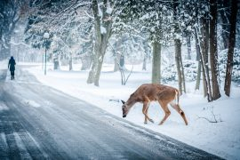 OH, DEER! WI LEADS IN CWD CASES