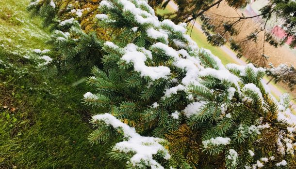 SNOW MEANS NO PARK CELEBRATION IN CHIPPEWA FALLS