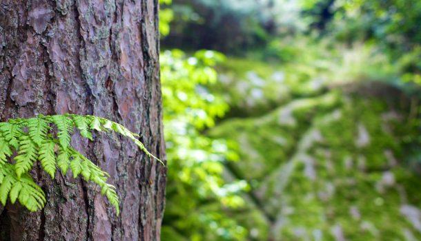 IRVINE PARK TREE-TING FOR INVASIVE SPECIES