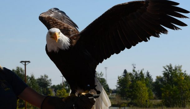VETERANS CAN SOAR INTO EAGLE CENTER FOR FREE