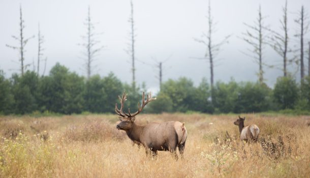 WI Plans for Elk Hunt