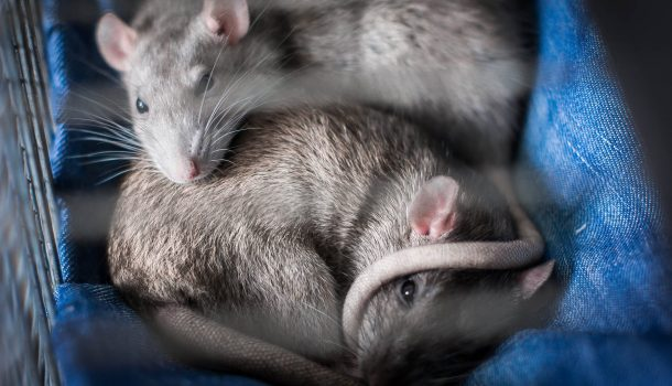 150 ANIMALS RESCUED; HUMANE SOCIETY SEEKS HELP
