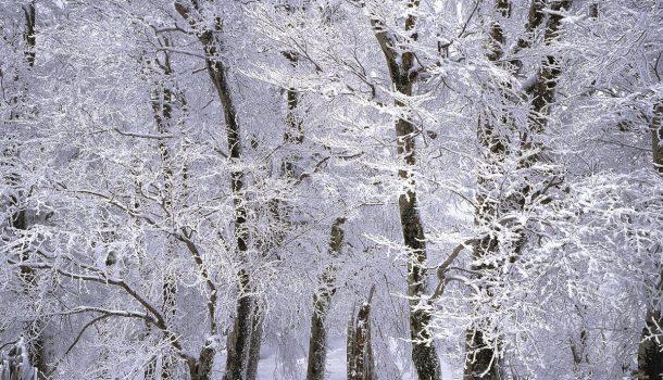 SNOW.M.G!
