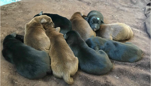 MARSHFIELD MAN FACING CHARGES AFTER DUMPING PUPPIES