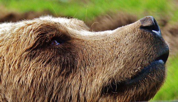 DNR Warns of Bears During Warmer Temps