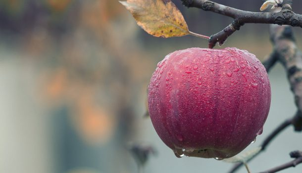 APPLE RECALL INCLUDES DAIRYLAND