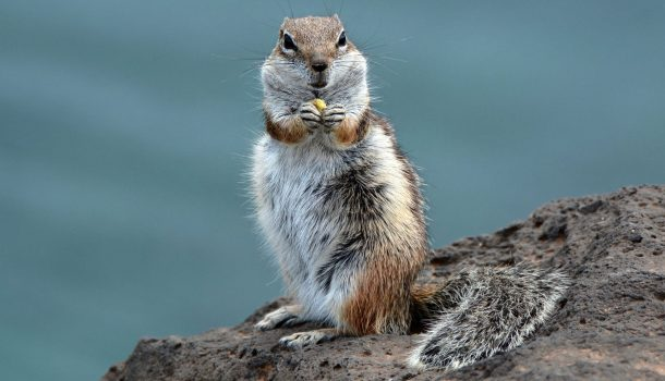 WHO, ME?? …THAT'S NUTS!