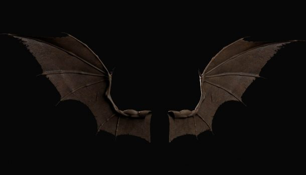 RABID BAT FOUND IN CHIPPEWA CO.