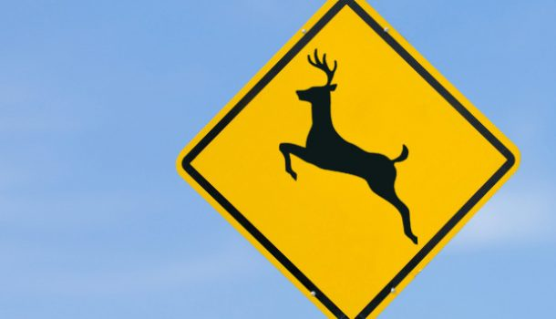 WI DNR Asks for CWD Help