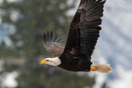 National Eagle Center Prepares for Popular Events