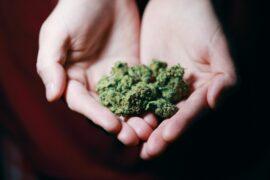 Marijuana Gets Green Light in Madison