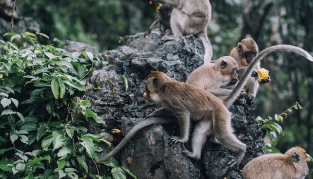 Friday Feel Good: Monkeying Around is the Assignment