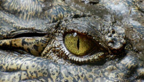 Don't Get a Gator as a Pet